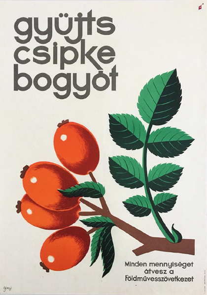 Go%cc%88nczi gebhardt tibor   collect rosehips   the agricultural cooperative 1960s original hungarian propaganda poster